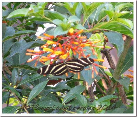 05-08-zebra2