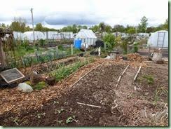 ColonFarm garden2