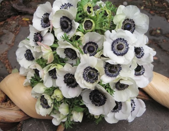 anemone bridal-bouquet-with-white-anemones-Françoise-Weeks