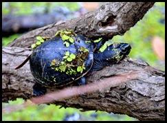 06e - Little Turtle