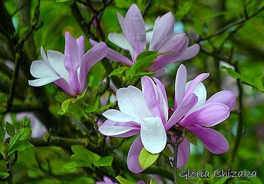 Glória Ishizaka - flor 4