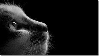 pisica-fundal-negru