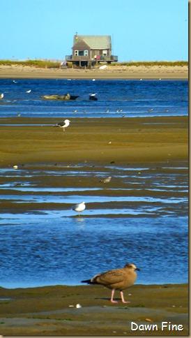 tern island birding_047