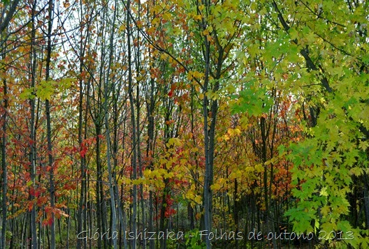 Glória Ishizaka - Folhas de Outono 15