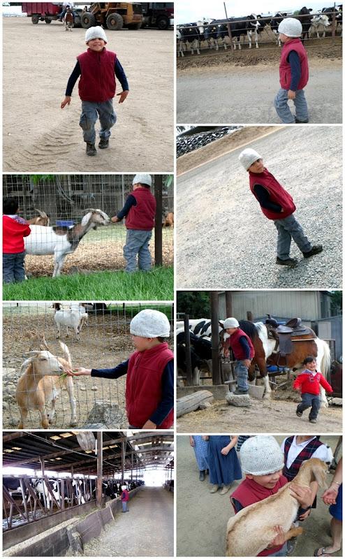 gf1 animals v2