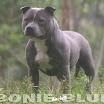 bonie_blue_web.jpg
