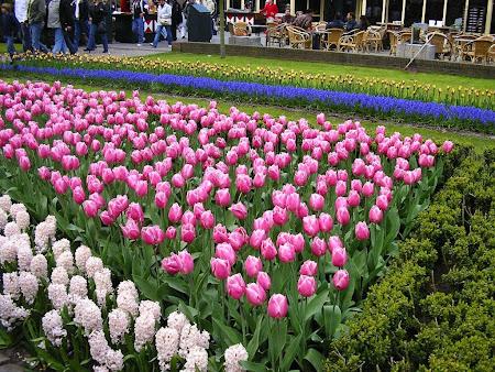 Amsterdam: Amazing Garden