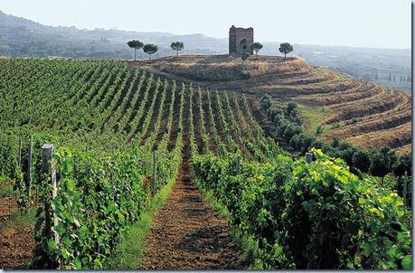Wine-Tasting-Tour-near-Rome