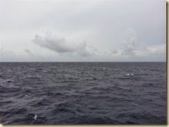 20141107_at sea w birds (Small)