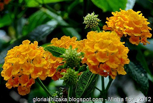 Glória Ishizaka - minhas flores - 2012 - 25
