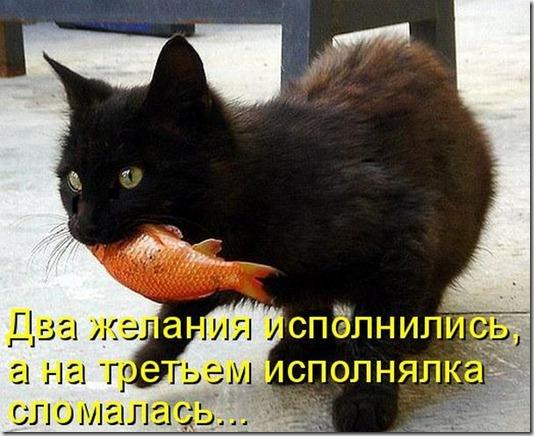 kotomatrix_0411
