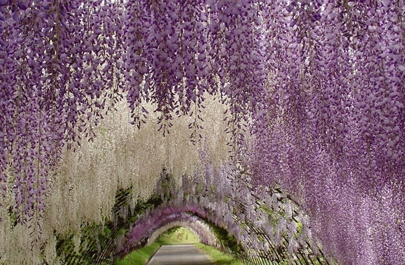ashikaga-flower-park-14