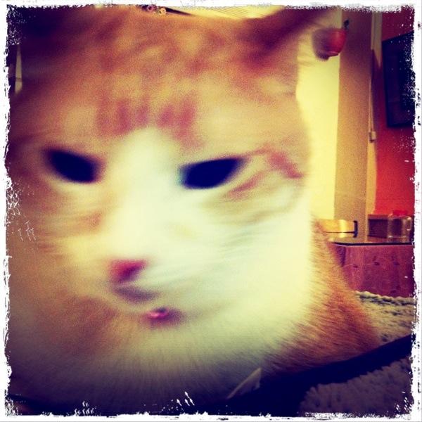 Lomo Life - Cats..
