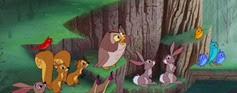 10 les animaux de la forêt