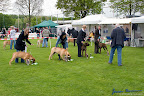 20100513-Bullmastiff-Clubmatch_31079.jpg