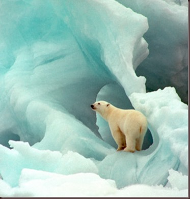 Amazing Animals Pictures Polic Bear (7)