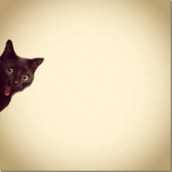 Gatos Felizes (22)