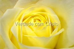 flowers-20348