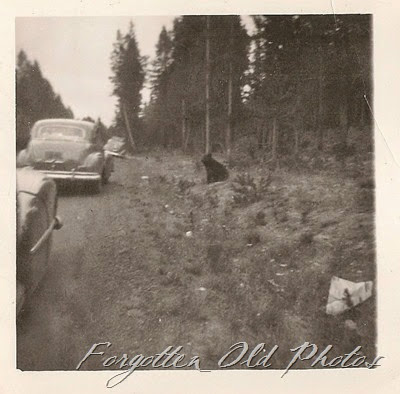 1949 Chevrolet Coupe and a Bear Duluth