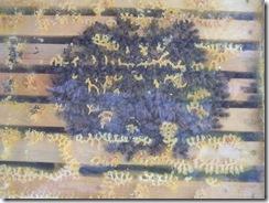 potopa včeliček 20,02,2012 046