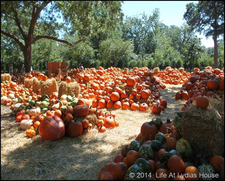 Dallas Arboretum - pumpkin festival-pumpkin village 3