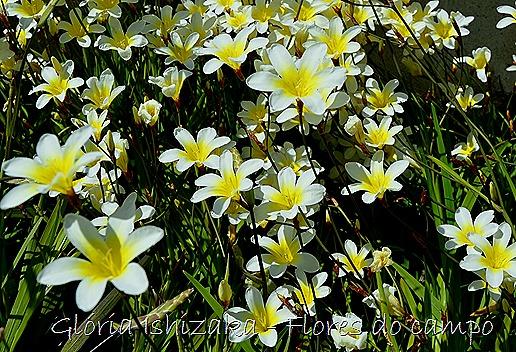 Glória Ishizaka -flor 9