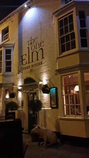 The One Elm in Guiild Street