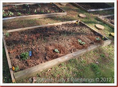 garden 2012 003