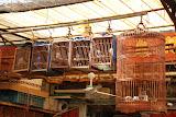 Shanghai - Pets market - 5 petites cages et 1 grande