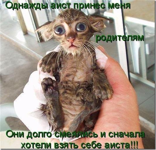 1246349697_jivotnie_1