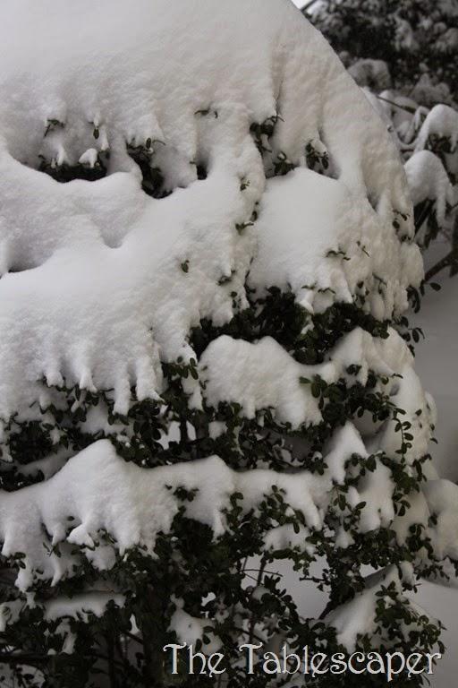 January Snow Storm Juno 007