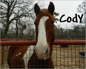 Cody (3)