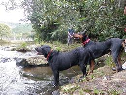 Dogs Trekking 4 (157)