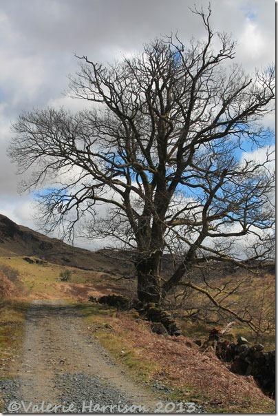 8-tree