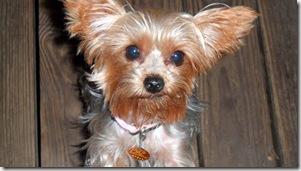 Maddie-5-Nov-2011