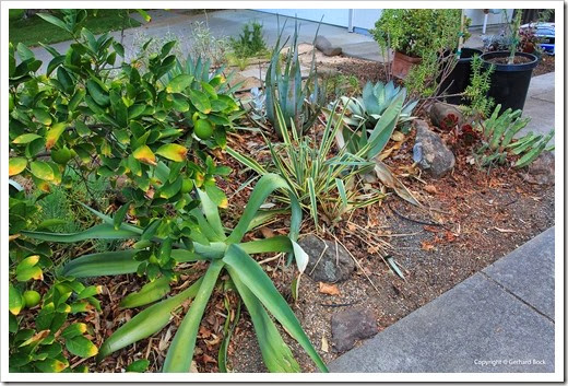 131002_driveway_succulent_bed_before_03