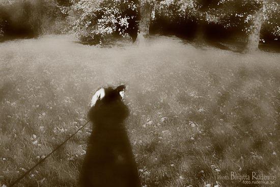 sepia_20111025_lindarMilton