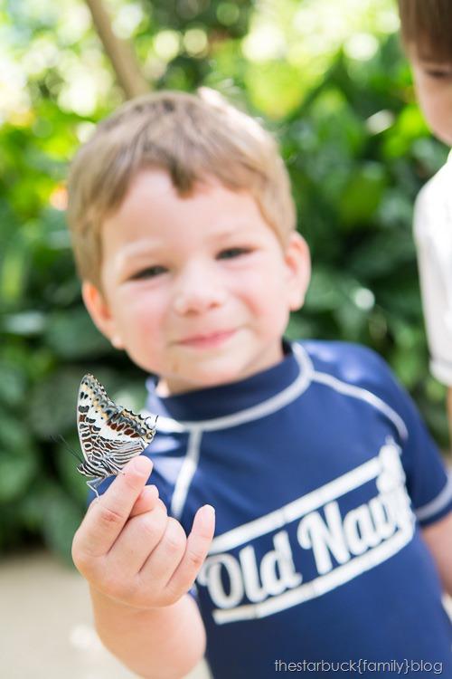 Callaway Gardens butterfly garden blog-24