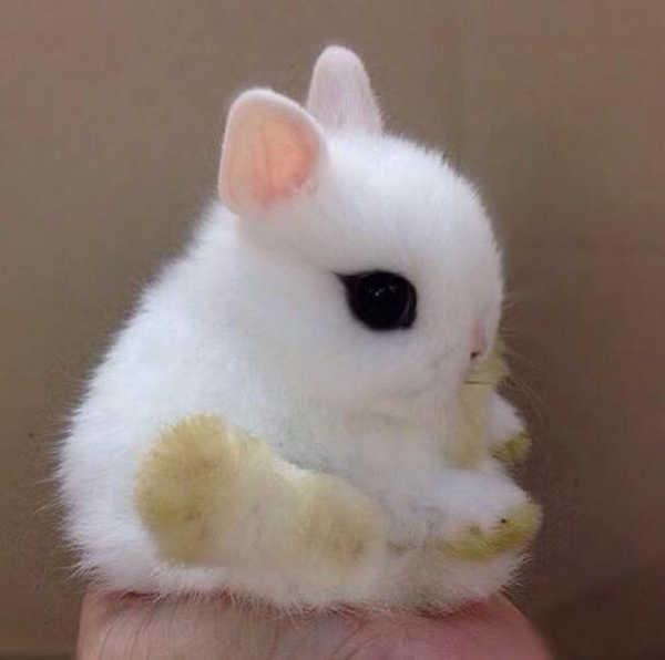2- coelhos