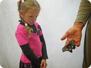 бабочки 042