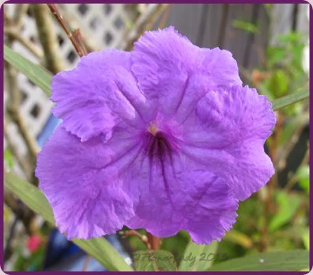 12-15-phil-violet