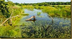 The Pond at Daniel Webster Sanctuary