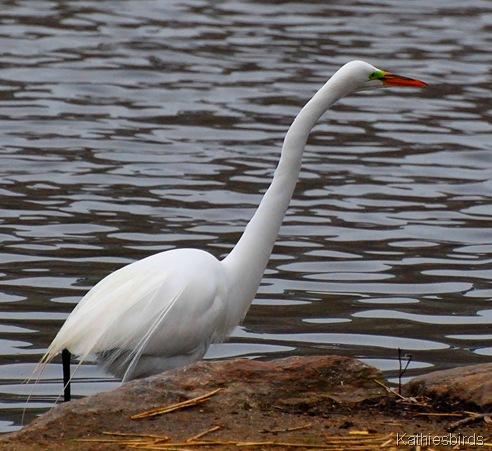 6. egret-kab