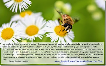 abeja-en-una-flor,-margaritas-163277