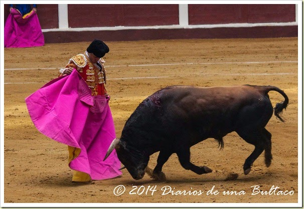 Toros 2014 (2)-22
