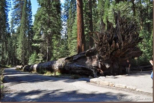 09-21-14 Yosemite 023