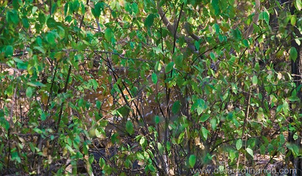 camuflagem-invisivel-animal-camouflage-photography-art-wolfe-desbaratinando (7)