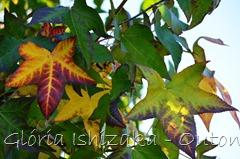38 - Glória Ishizaka - Folhas de Outono