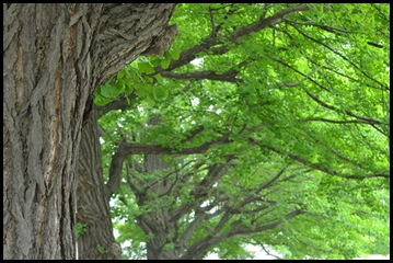 2011-06-11 Yosokoi 011