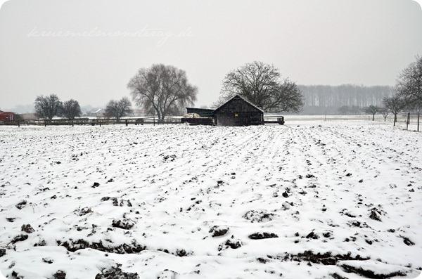 Schneesonntag 20zwölf (21)
